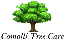 Comolli Tree Care – Certified Arborist & Tree Services